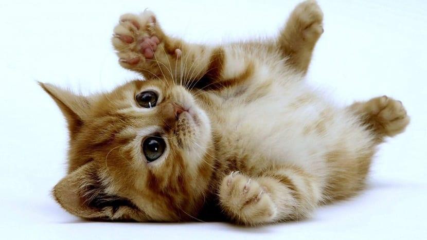 guia basica gatos