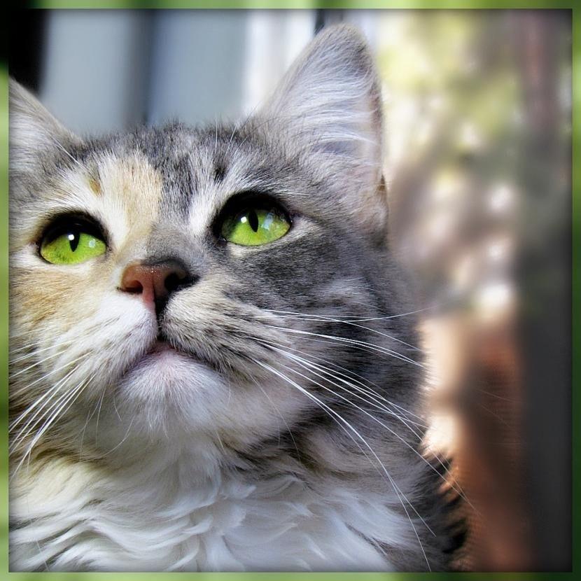 Gato con ojos sanos