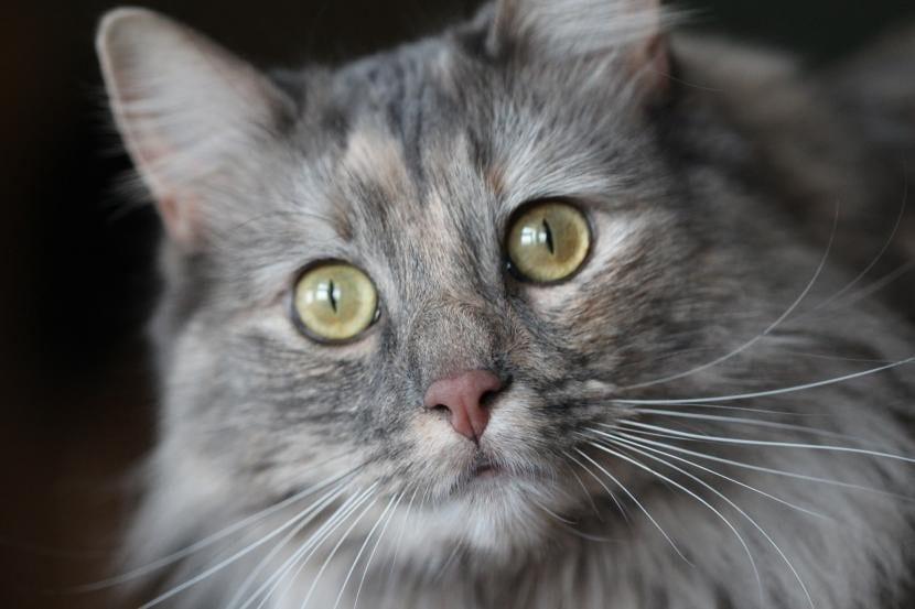 Gato con ojos limpios