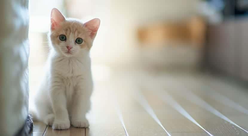 enfermedades respiratorias gatos