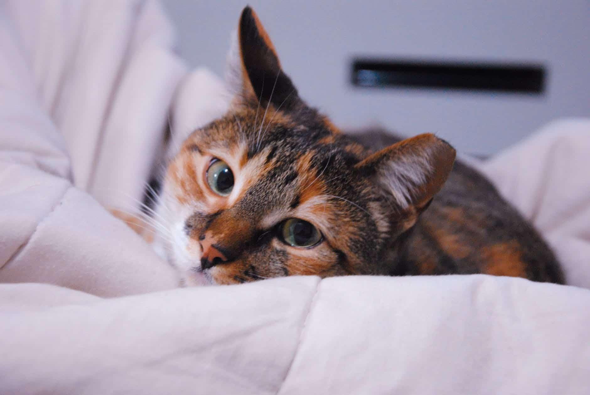 Los gatos pueden ser cariñosos