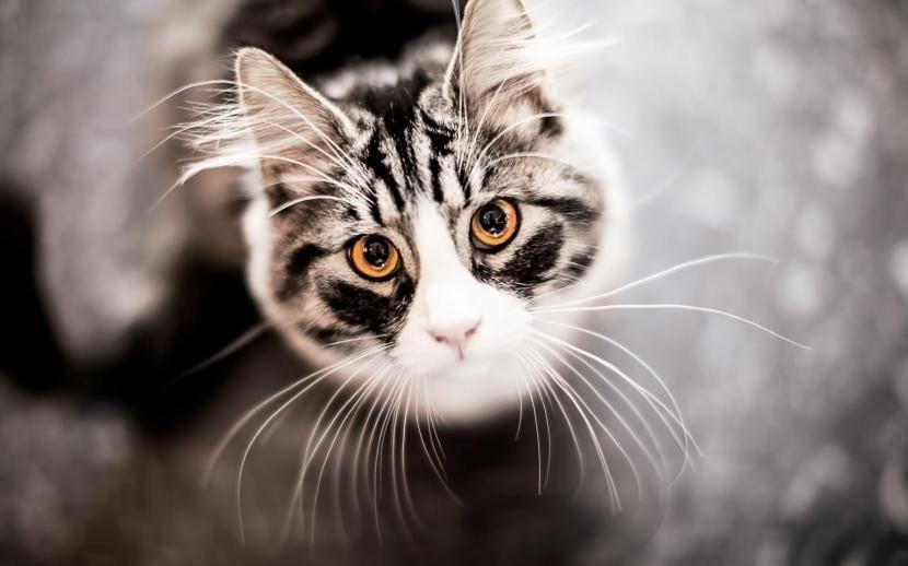 Gato con bigotes