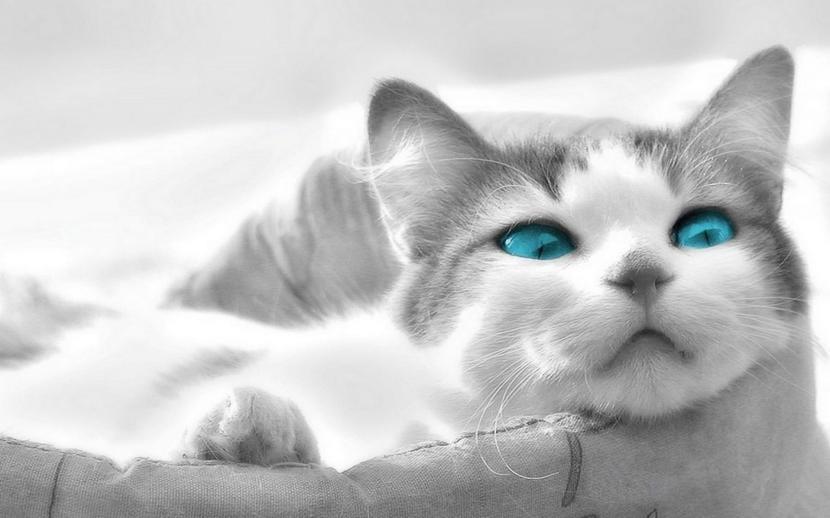 Gato en su cama