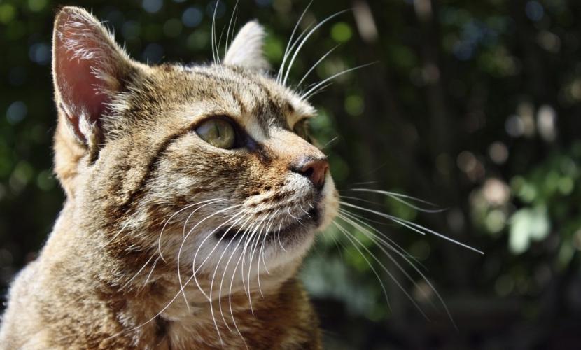 Gato en exterior
