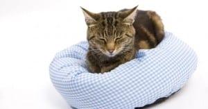 Procura que tu gato esté tranquilo