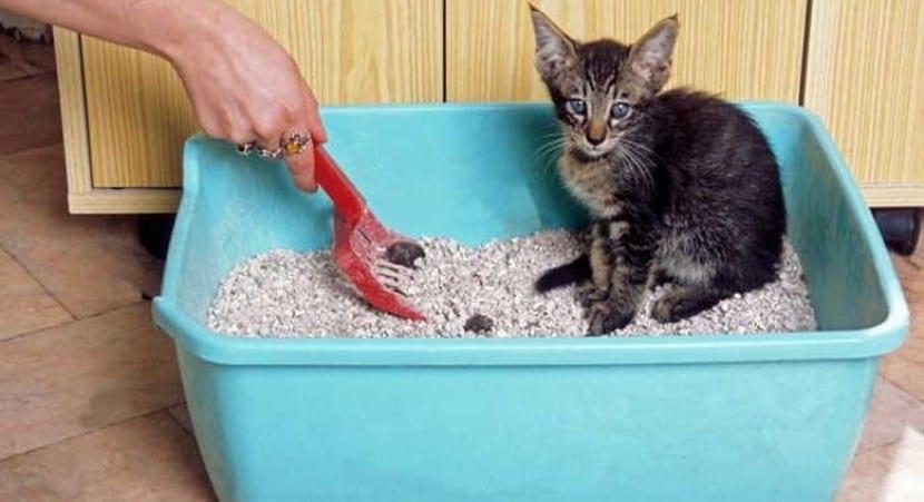Gatito en el arenero