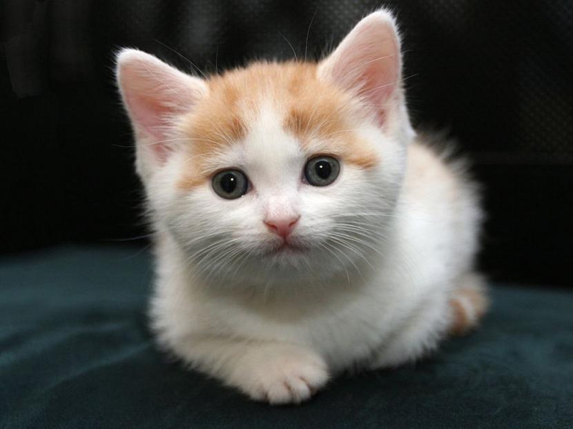 Gatito joven