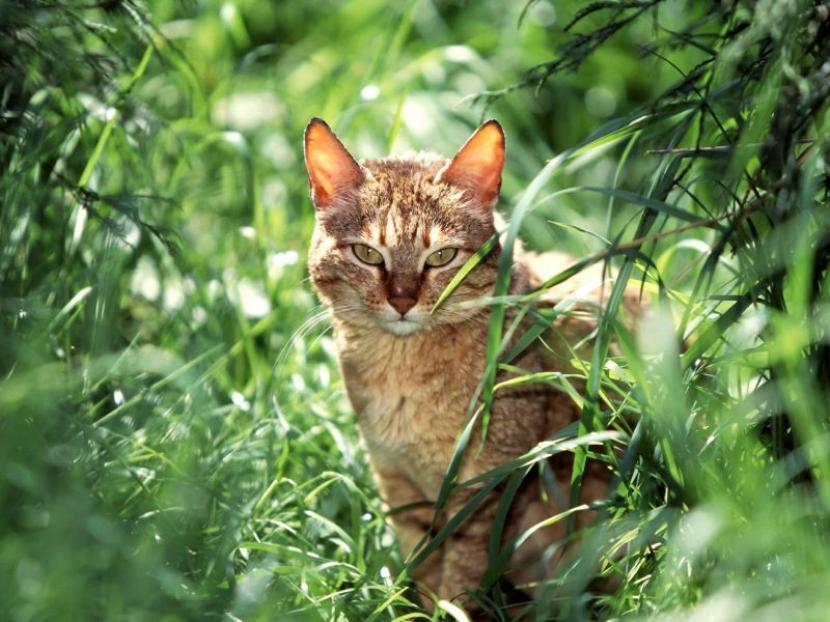 Gato adulto en jardín