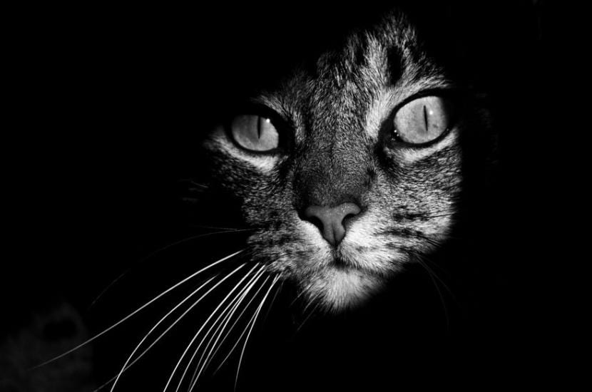 Gato por la noche