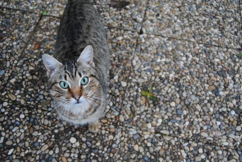 Gato en el la calle con miedo