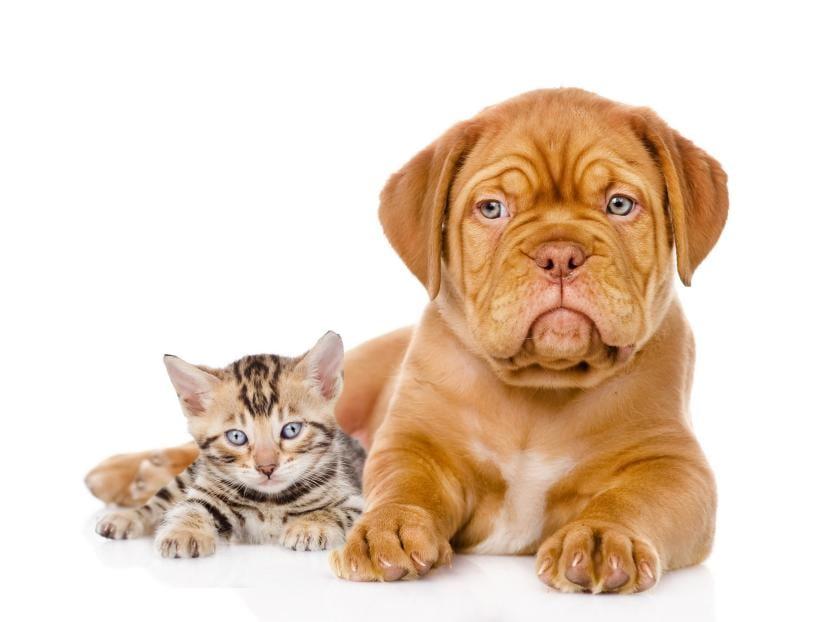Gatito con cachorro