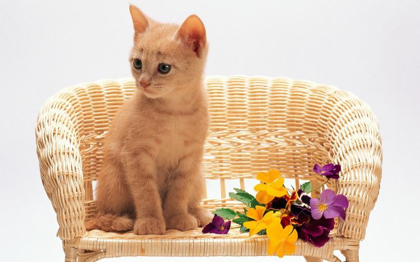 Gatito sentado