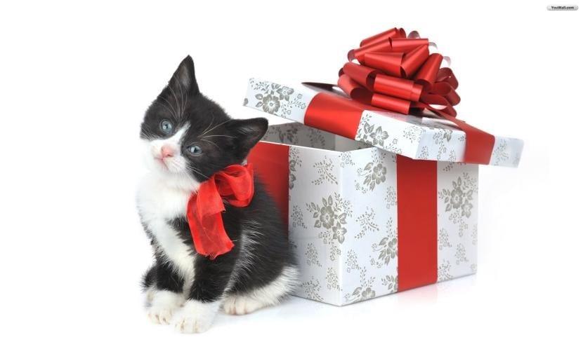 Gatito como regalo de Navidad
