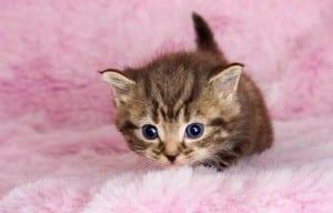 Gatito en manta