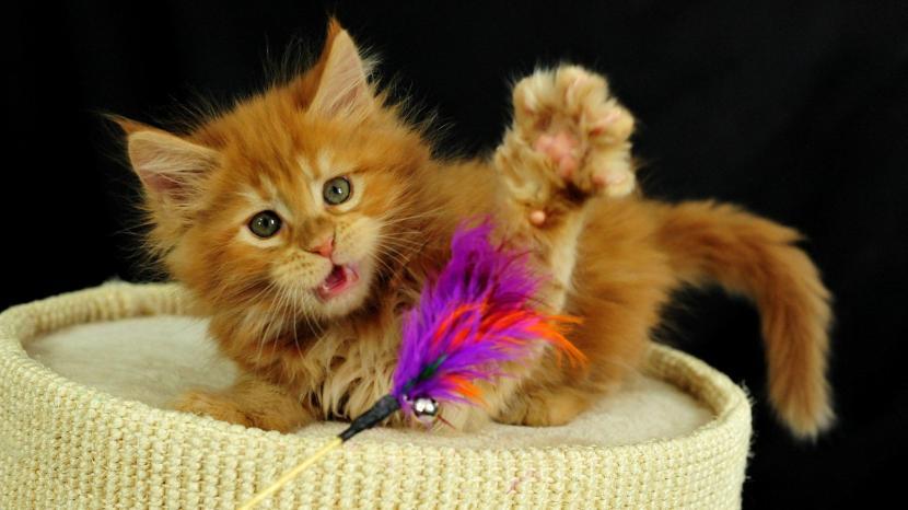 Gatito jugando con plumero