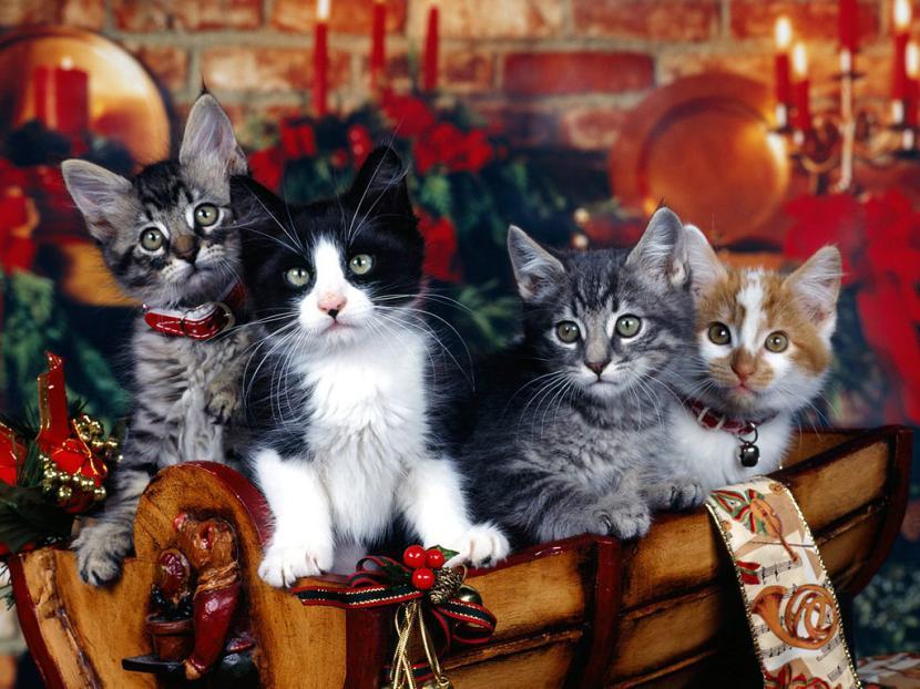 Gatitos en Navidad