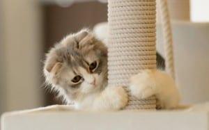 Un árbol rascador es el accesorio ideal para tu gato