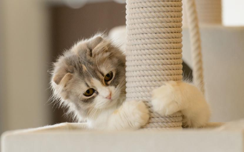 Gato jugando con el rascador