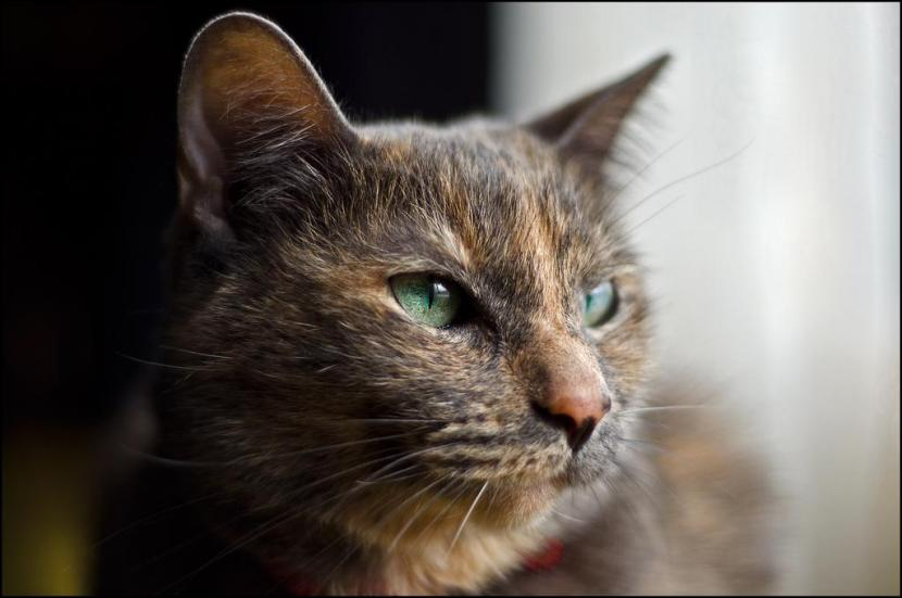 gato_mirando