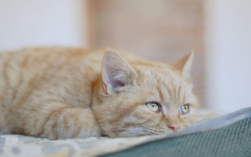 Gato naranja triste