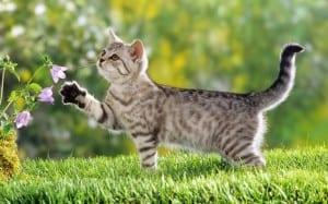 Gato oliendo flores