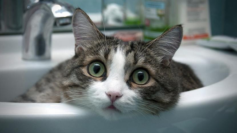 Gato en el lavabo