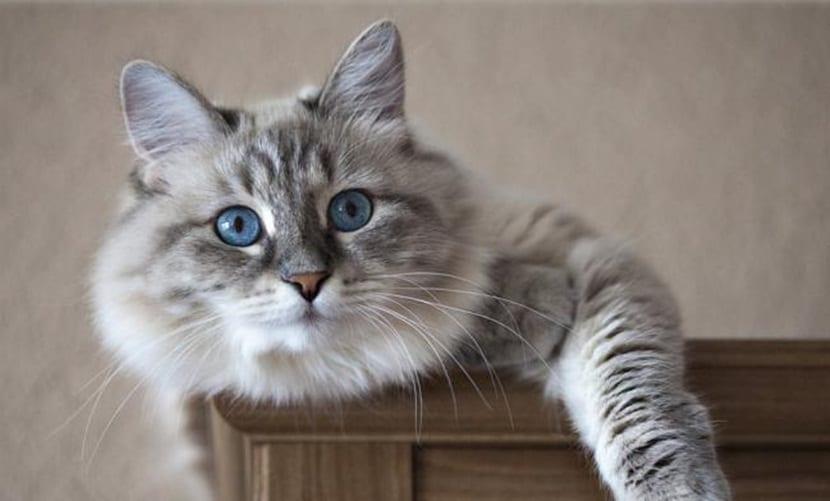 datos curiosos sobre los gatos