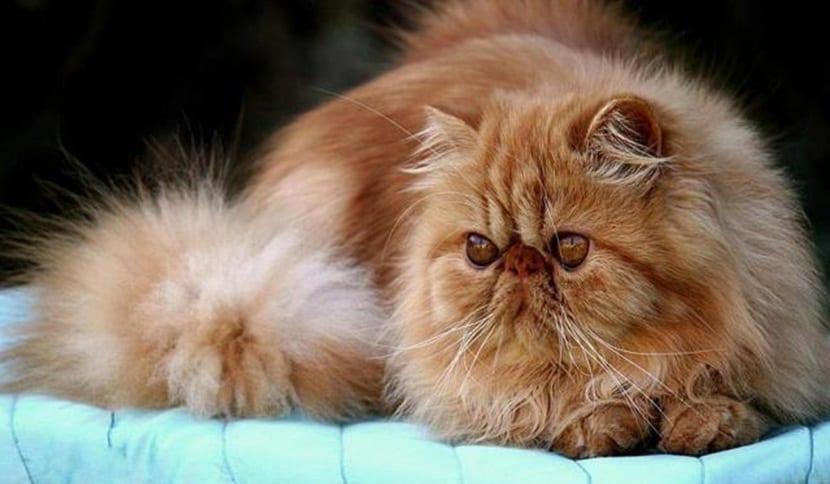 gastritis gatos