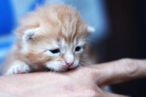 Gatito bebé