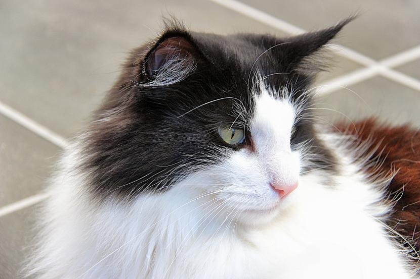 Gato cazador