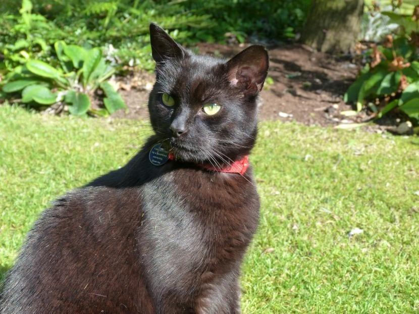 Identifica a tu gato con collar y placa para evitar denuncias