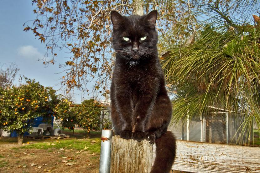 Gato negro en un poste