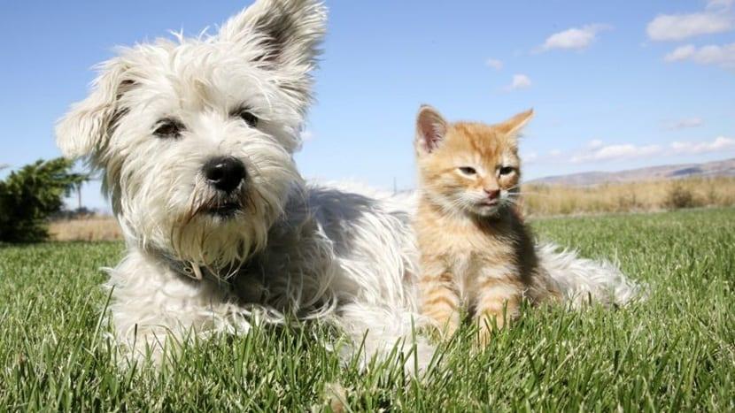 Odio entre perros y gatos