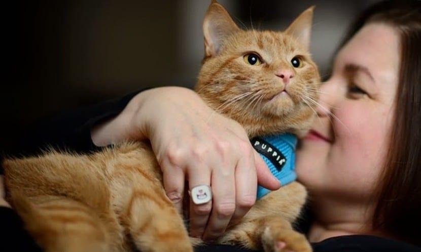 Gato común con una mujer
