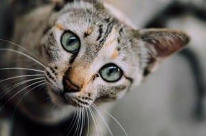 Gatito mirando a la cámara