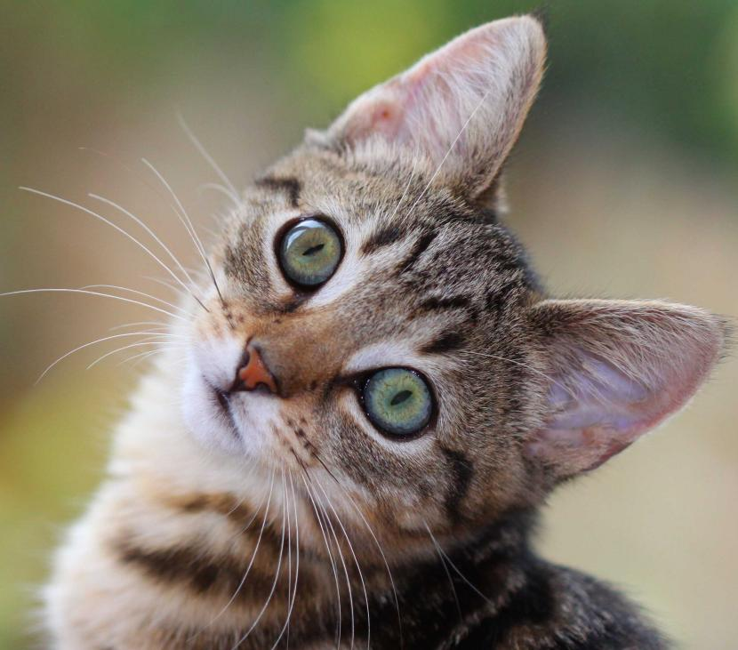 Cómo educar a un gatito