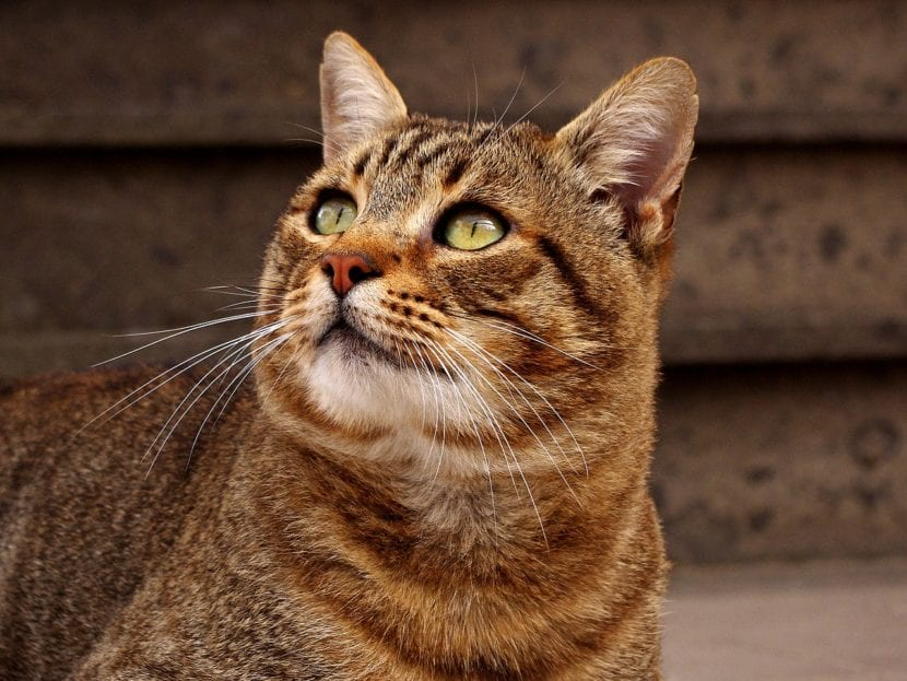 Presenta a tus gatos poco a poco