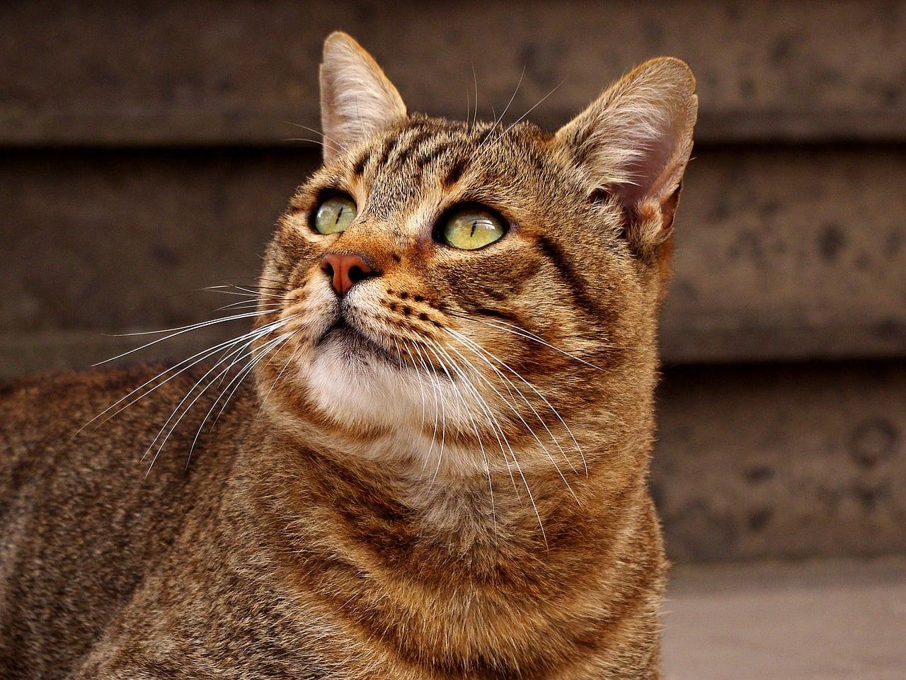 mi gato tiembla