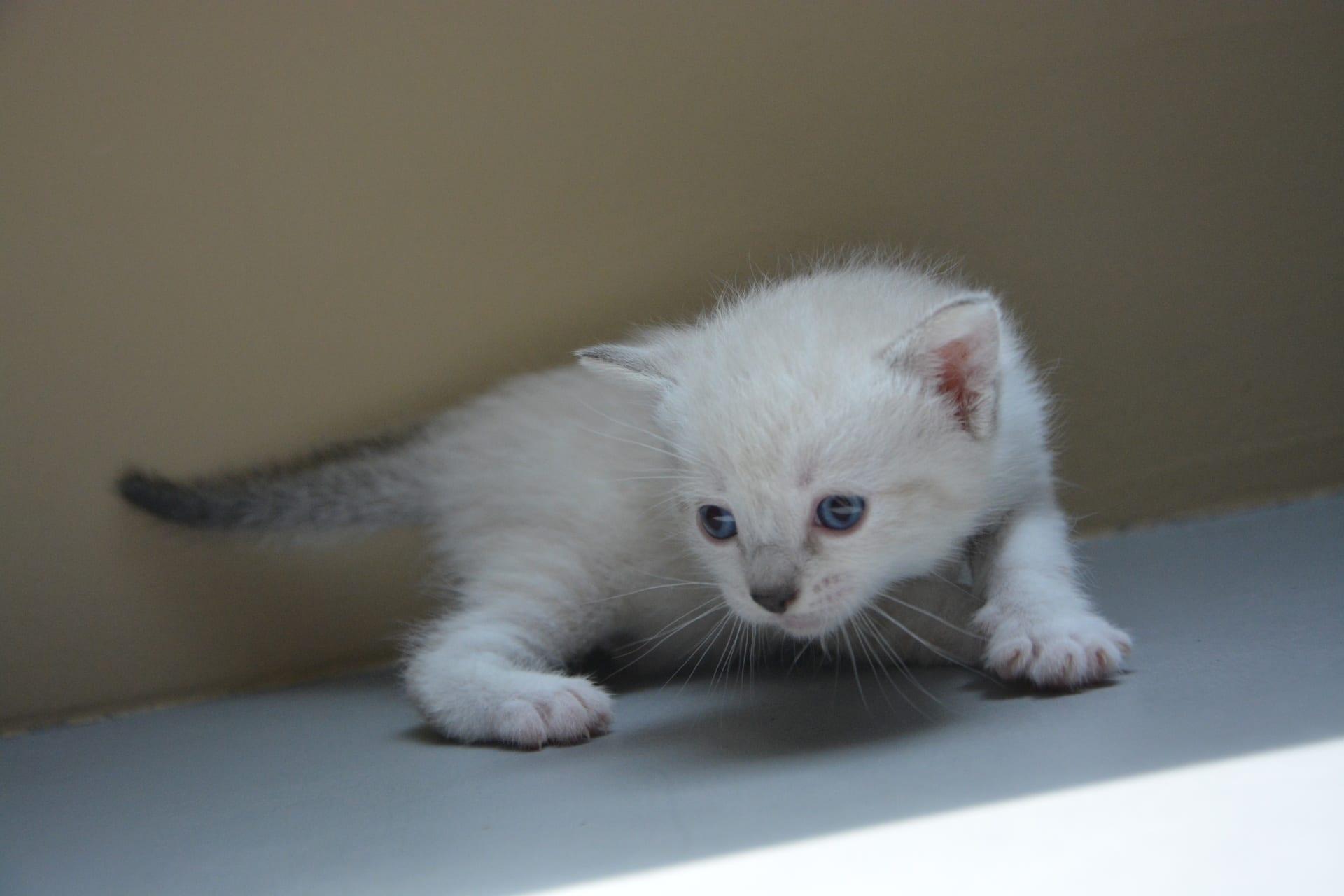 gato bebé tiembla