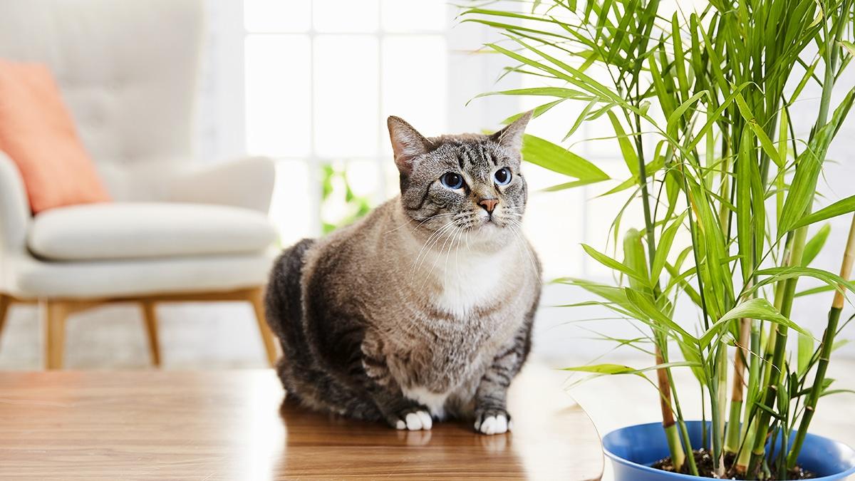 A los gatos a veces les gusta comer hierba