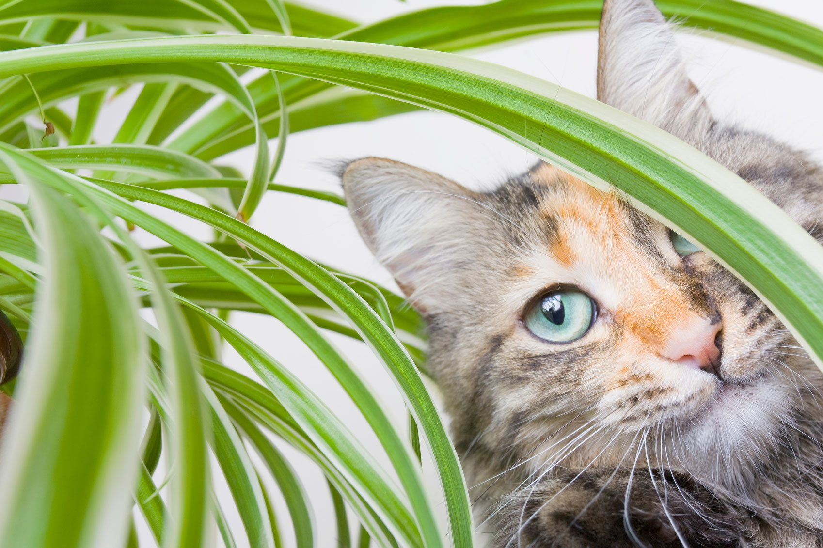 Hay plantas beneficiosas para gatos