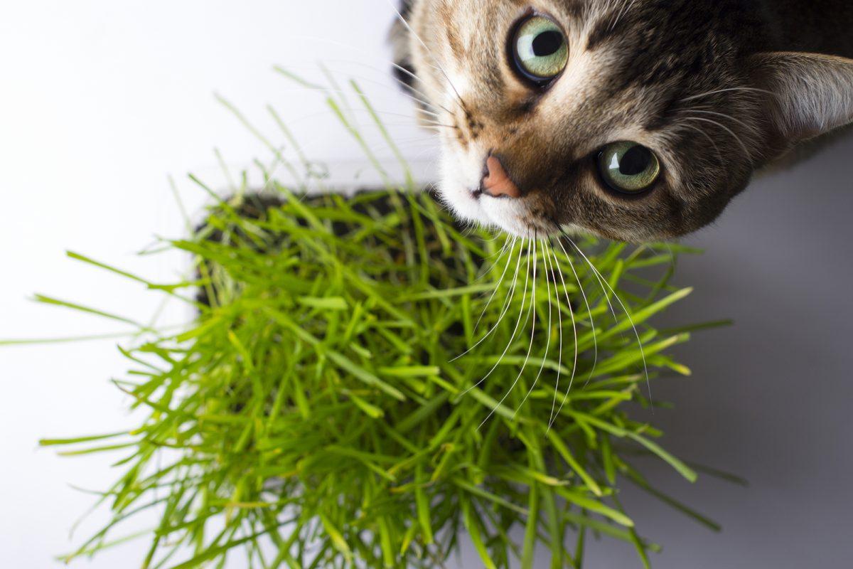 Descubre las plantas beneficiosas para los gatos