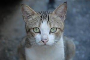 Gato feral