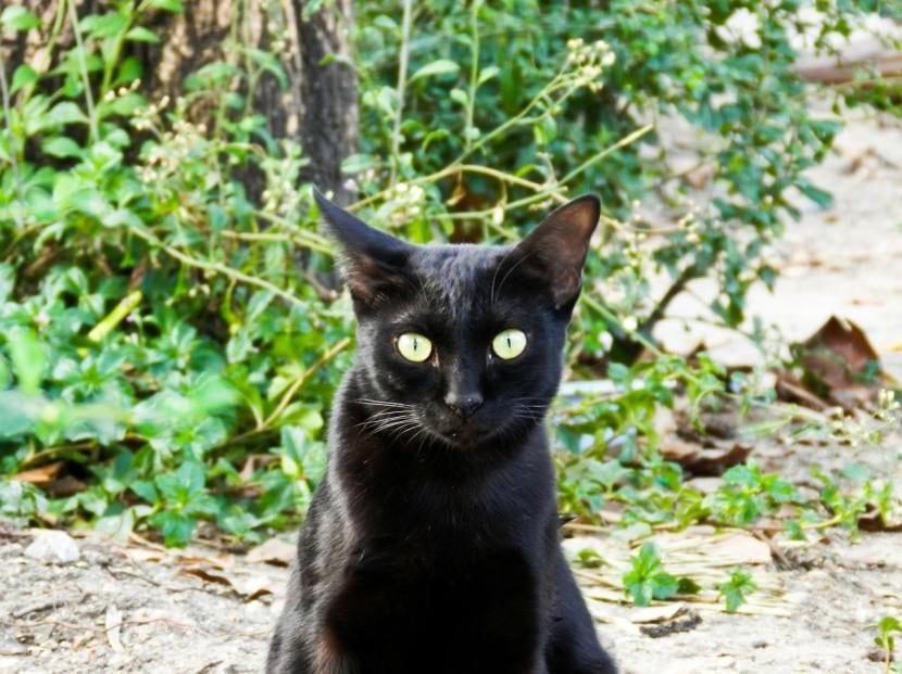 Gato callejero negro