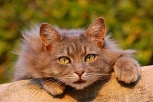 Llamar a un gato