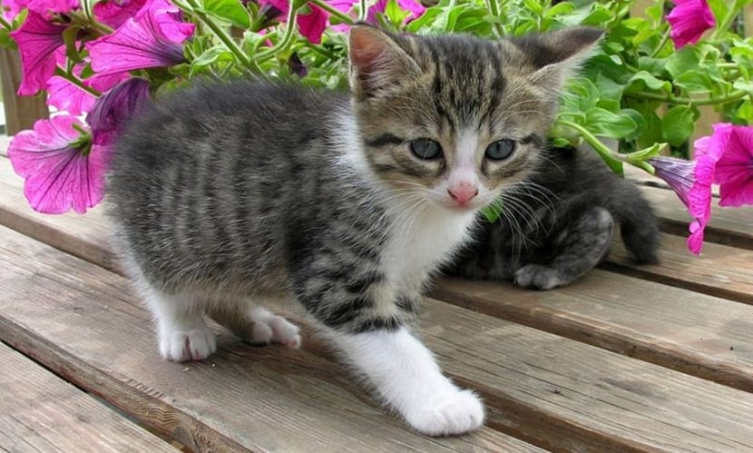 mudanza gatos