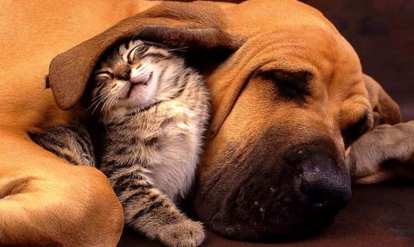 El gato conociendo a otras mascotas