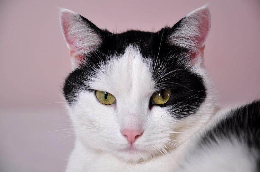 Cómo tratar la caspa en gatos