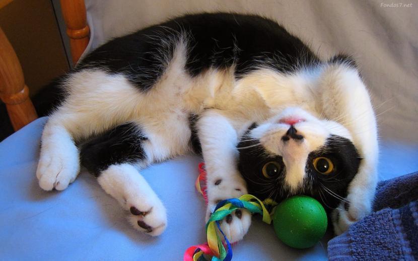 Gatito con sus juguetes