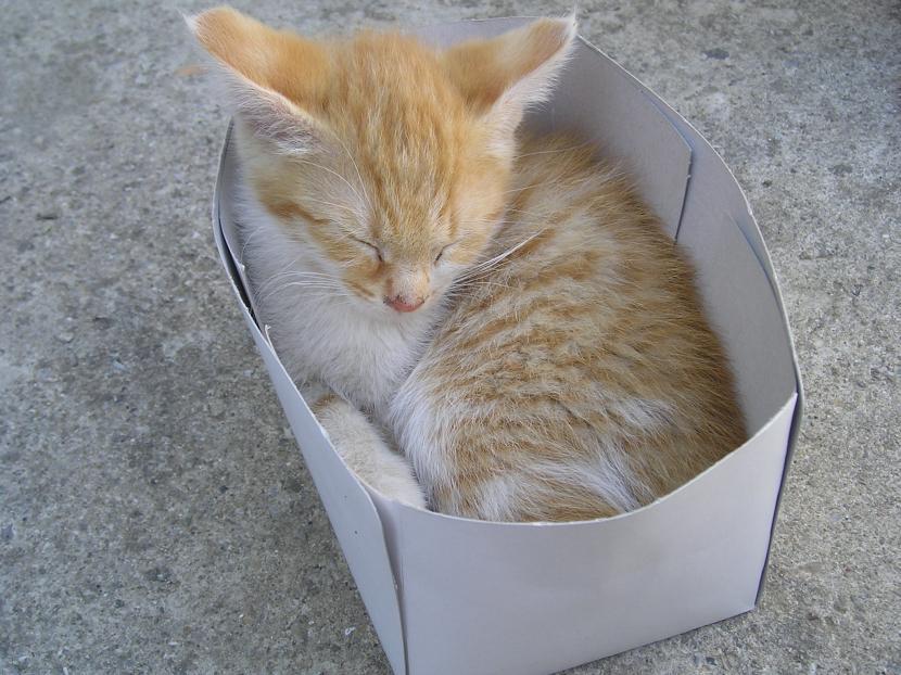 Gatito naranja en caja